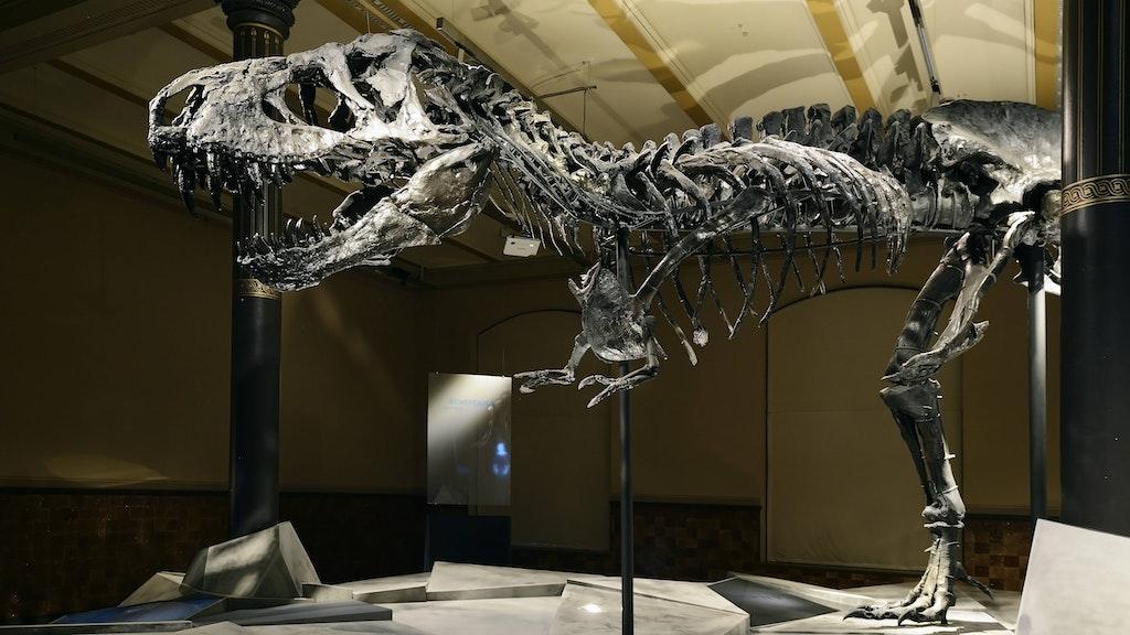 Am Naturkundemuseum entsteht ein Wissenschaftscampus