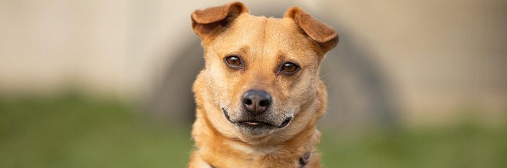 Kleiner Luca 6 Wurde Ausgesetzt Der Traurigste Hundeblick Berlins