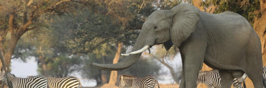Elefanten Massensterben
