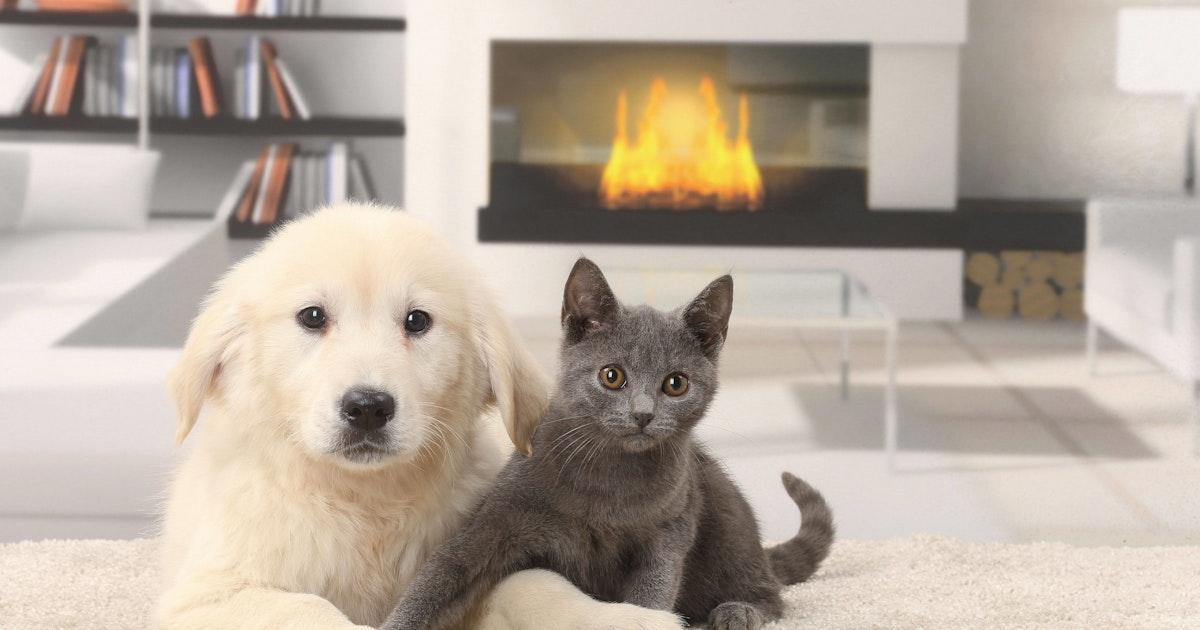 Corona: Meldepflicht für infizierte Haustiere beschlossen