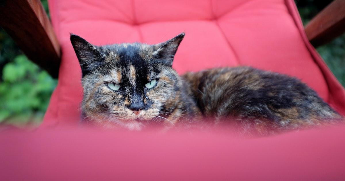 Können Katzen Corona Kriegen