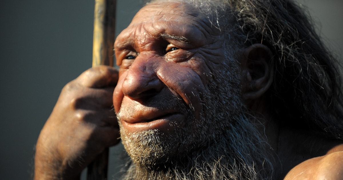 Neanderthal genes are a Covid-19 risk factor
