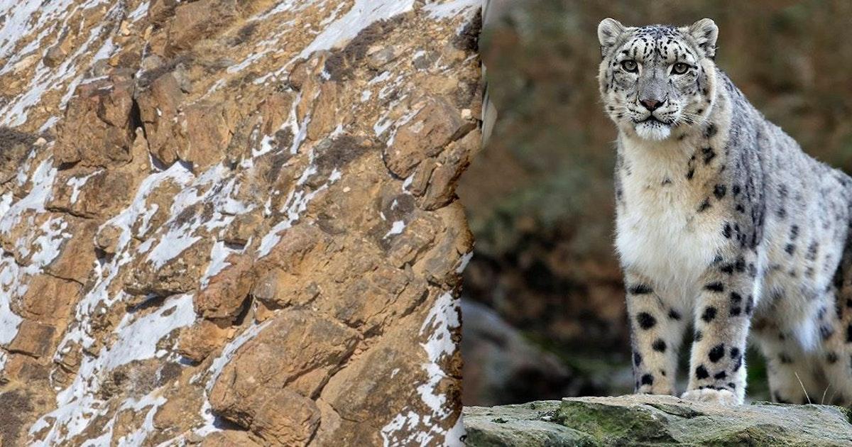 Irres Suchbild macht alle verrückt: Auf diesem Foto versteckt sich ein Leopard! Wetten, dass Sie sie nicht finden?