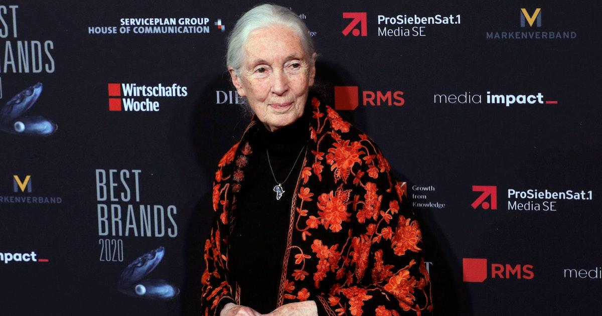 Affen-Forscherin Jane Goodall: Die Menschheit ist selbst schuld am Coronavirus